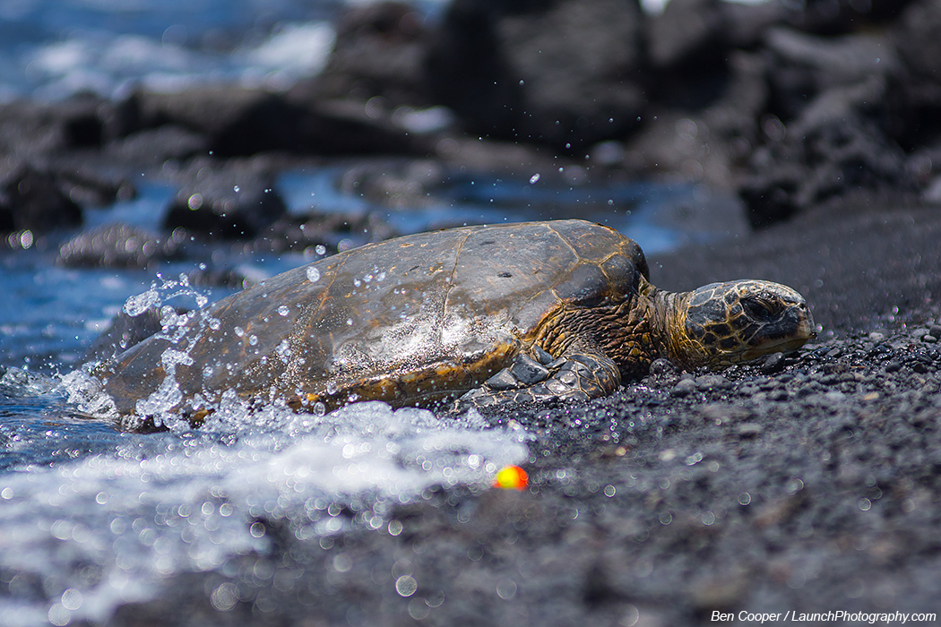Black Sand Turtle Beach Big Island