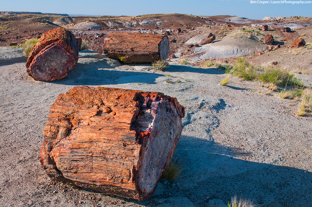 petrified forest natl pk mature personals Prehistoric people  and later paleoindian camps have been found within petrified forest national park  one of many petrified wood structure sites dating from .